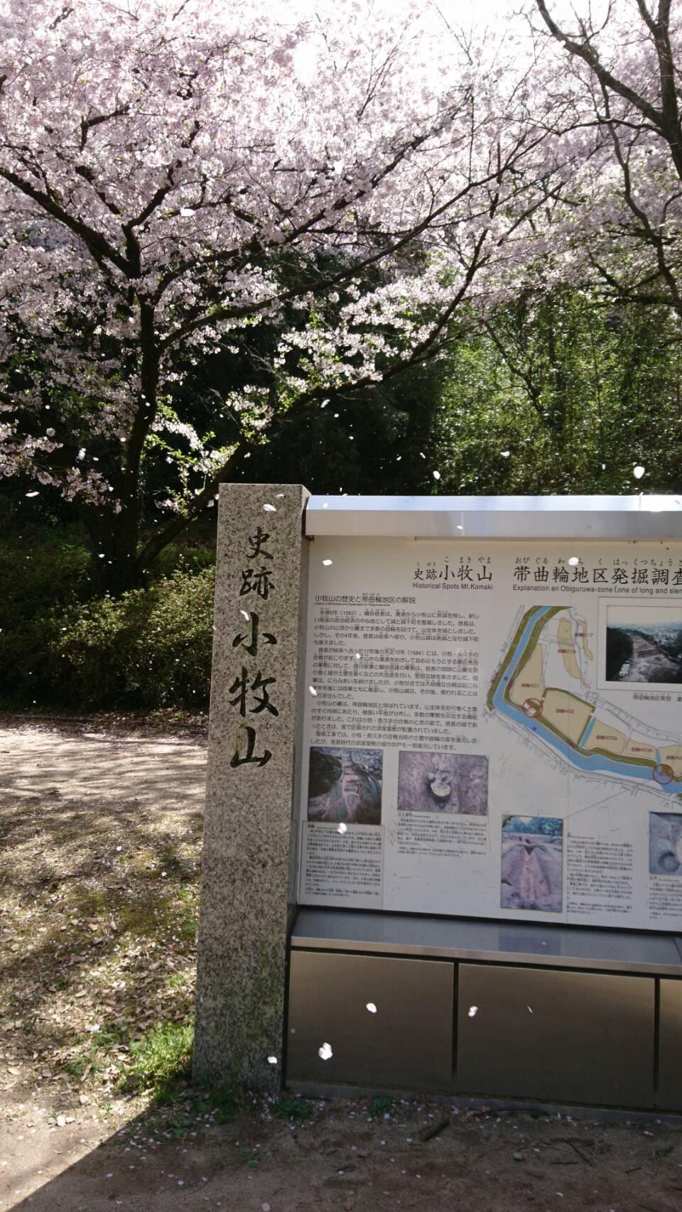 桜だより✿ 画像