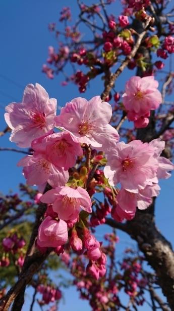 🌸春🌸の訪れを感じました☆ 画像