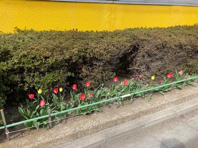 JSS仙台にも春の訪れを感じます 画像