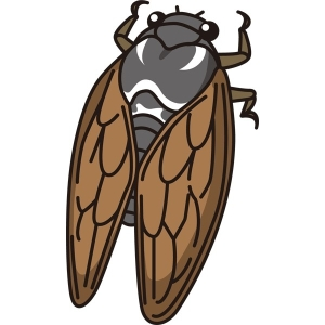 insect_01