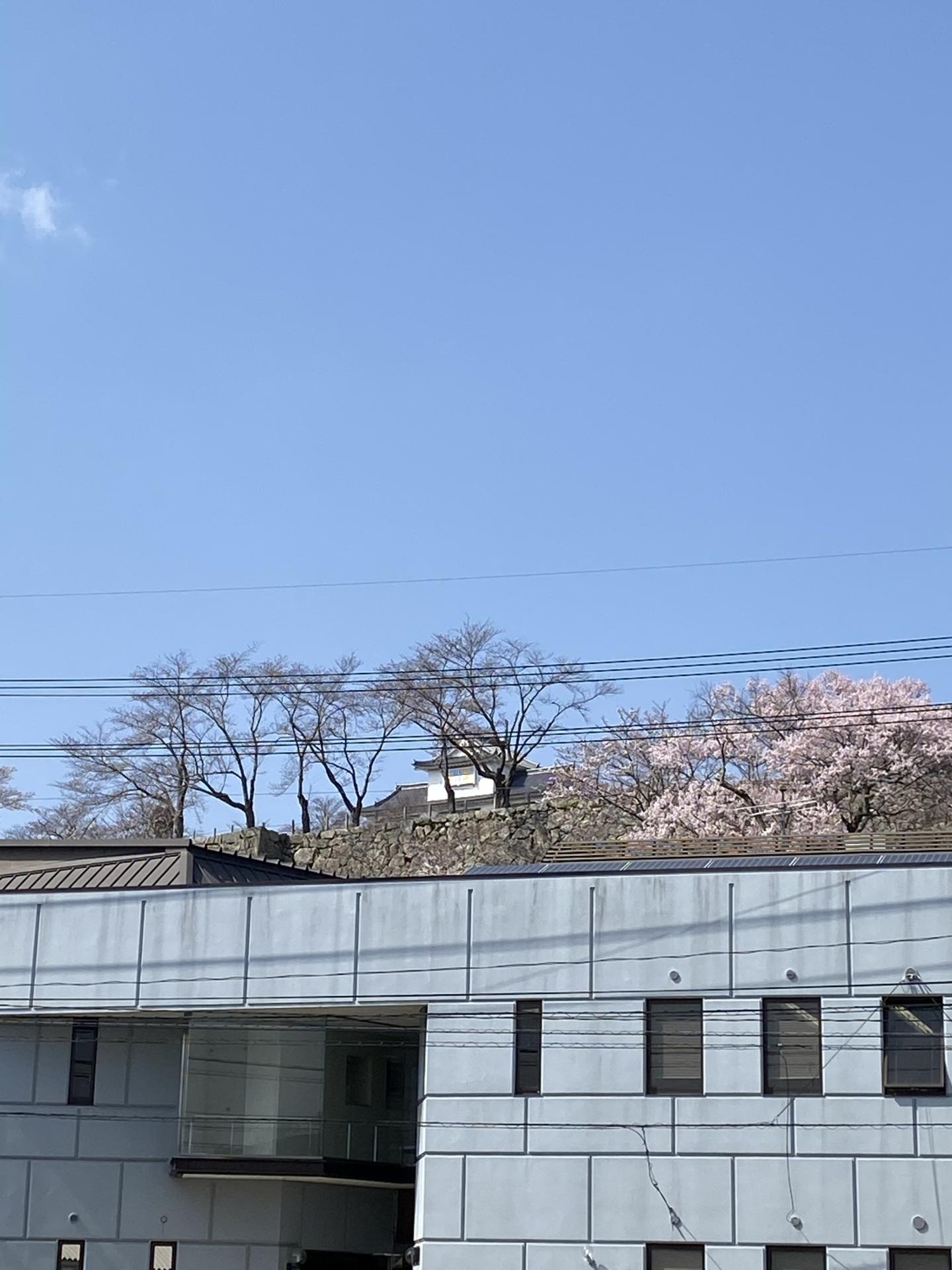 津山城へお散歩 画像